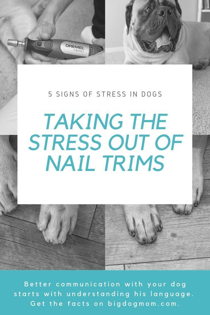 5 subtle signs of stress in dogs take the fear out of