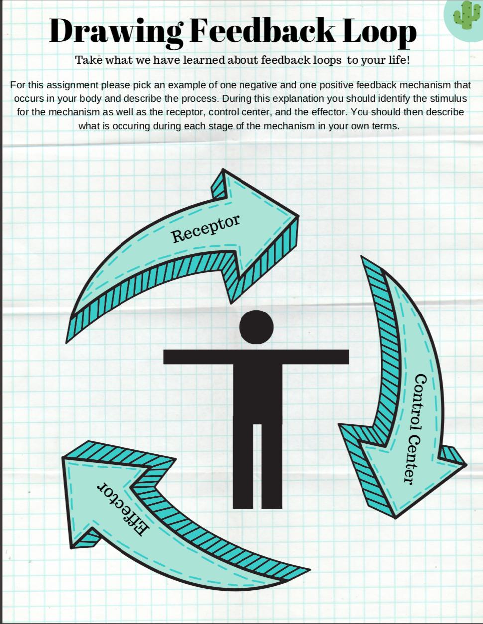 Feedback Mechanism Worksheet Biology Lessons Feedback Graphic Organizers [ 1252 x 970 Pixel ]