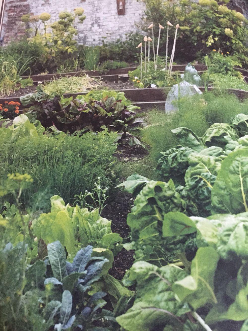 Inspiração de horta!