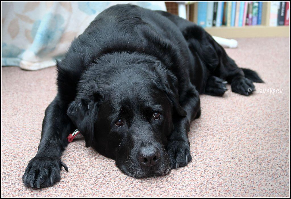 dog memes dog breeds dog kennel ideas dog bed dog house dogs rh pinterest com