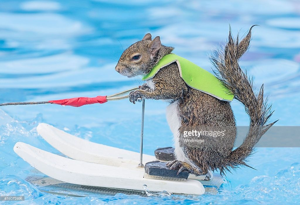 Twiggy the WaterSkiing Squirrel performs during X Games