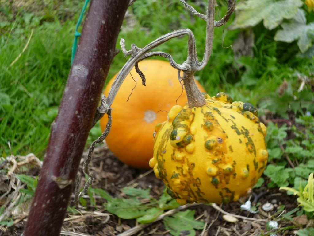 Ornamental gourd. i.e don't eat it!