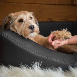 Schöne Hundebetten schöner wohnen mit hundebetten thedogshop impressionen wohnen