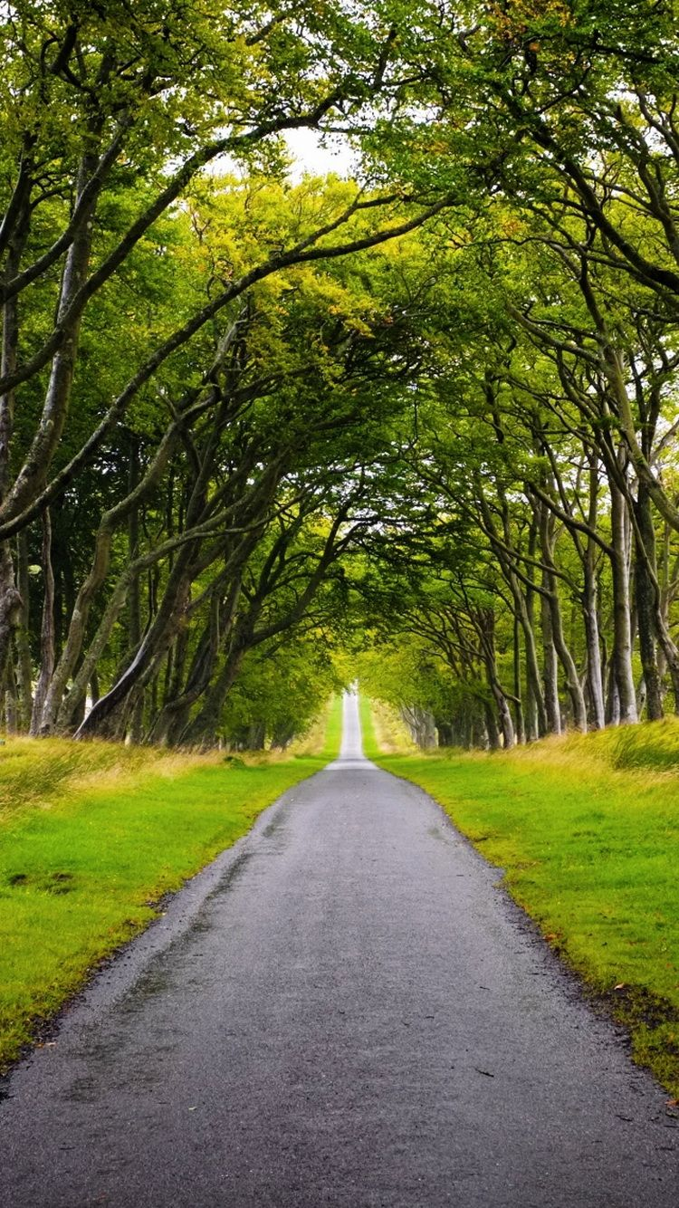 Scotland Forest Road iPhone 6 Wallpaper | iPhone ...