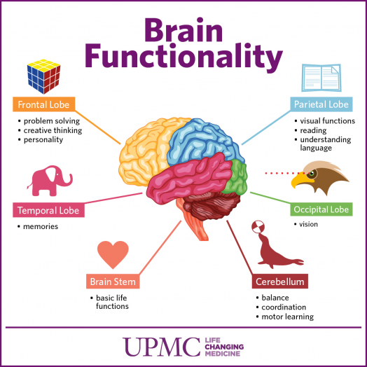 Get to Know The Parts of Your Brain | UPMC HealthBeat ...
