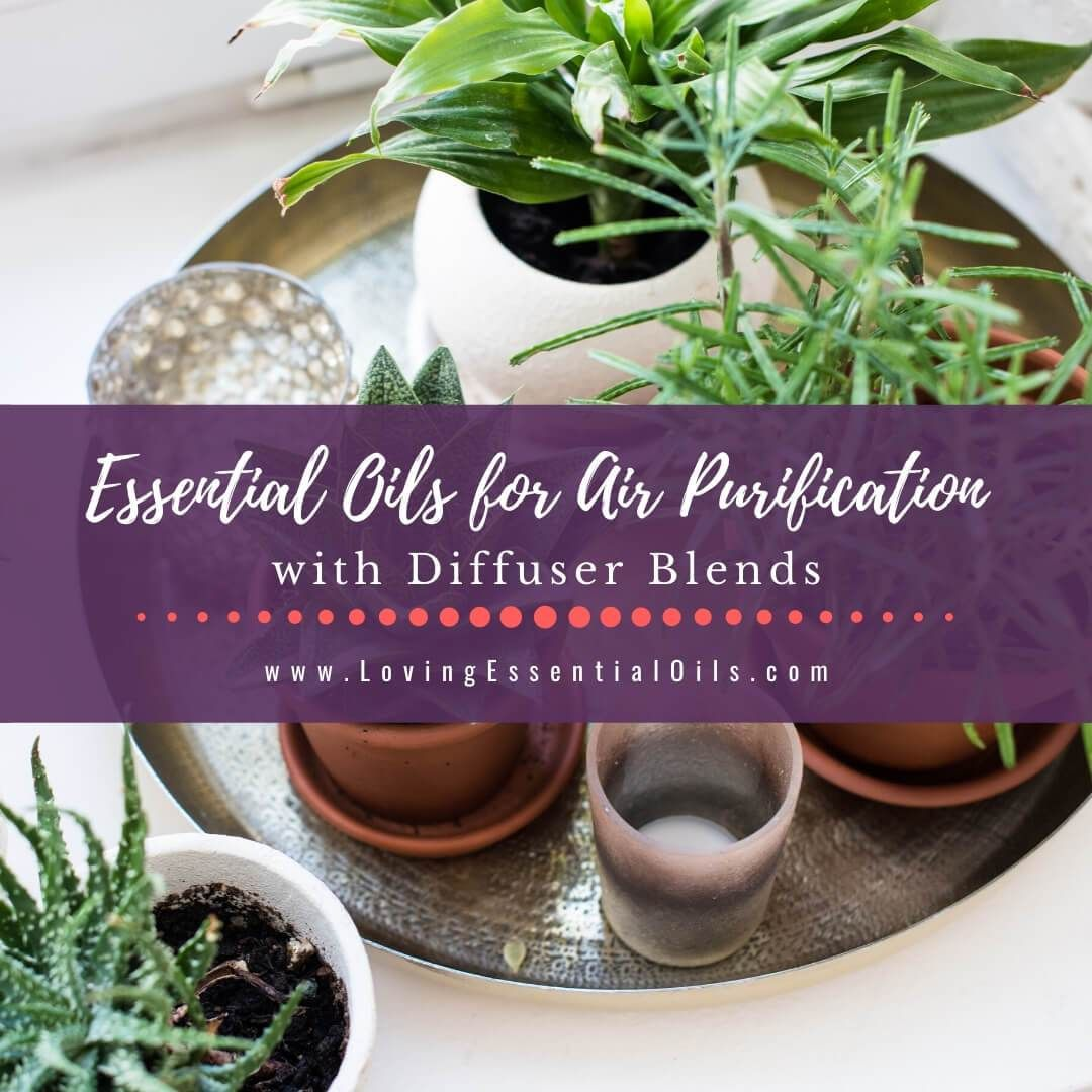 Essential Oils For Air Purification With Purifying