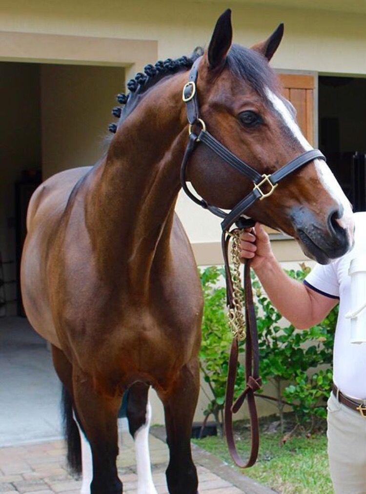 Dream horse... for my sweet Julia ❤️
