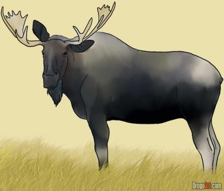 How to draw a moose fix for best home design moose pinterest how to draw a moose fix for best home design moose pinterest moose steps youtube and drawings thecheapjerseys Gallery