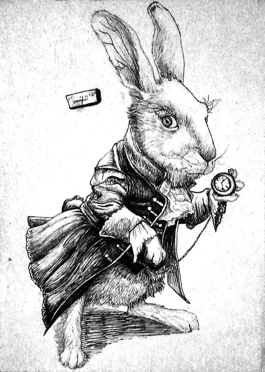 Find This Pin And More On Alice In Wonderland And Through The Looking  Glass Alice In Wonderland Rabbit Drawing