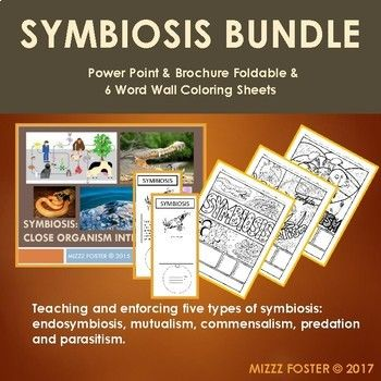 Symbiosis Bundle Power point, Brochure Foldable and 6