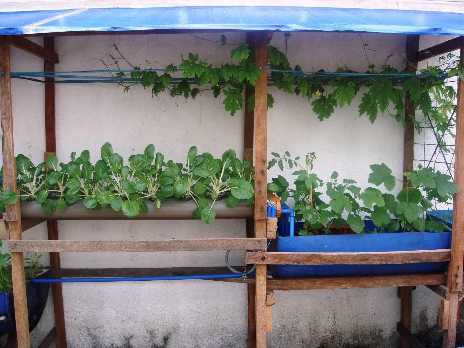 philippines simple aquaponic setup aquaponics a system of
