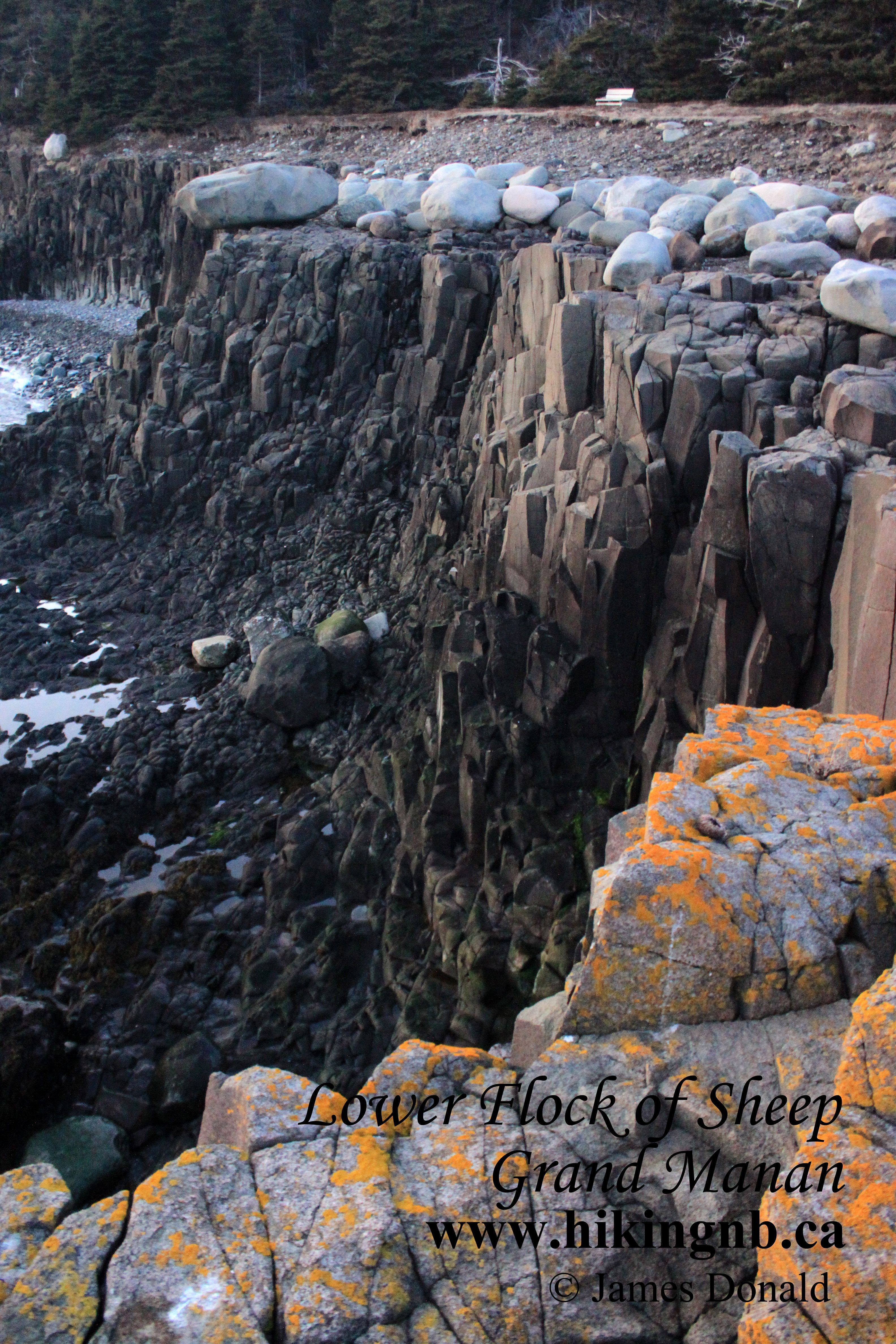 Flock of Sheep Trail Grand Manan New