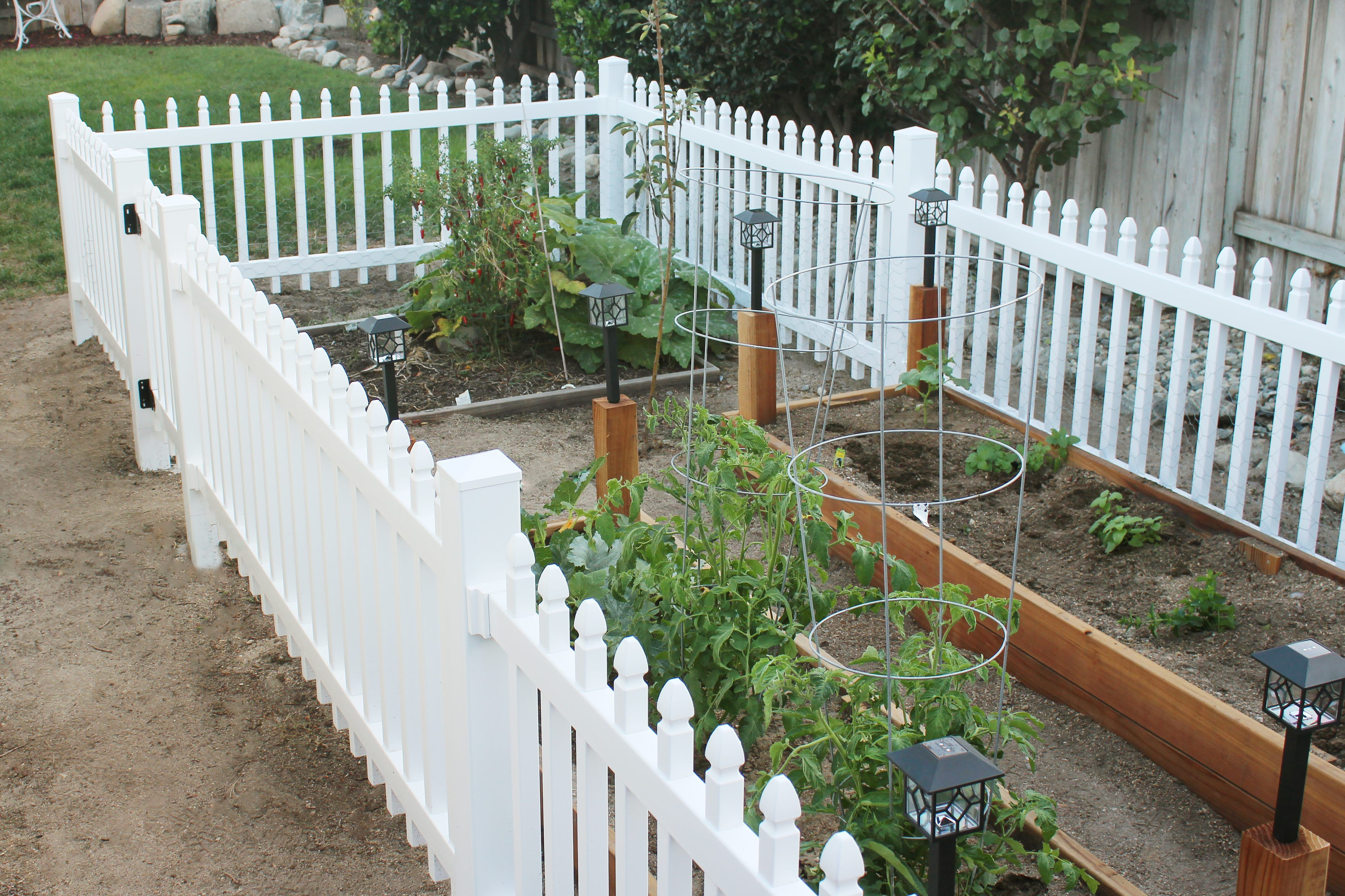 Build a garden fence to keep smaller animals out of the