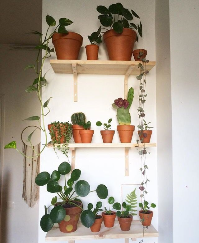 pilea peperomioides ideas for my small apartment pinterest. Black Bedroom Furniture Sets. Home Design Ideas