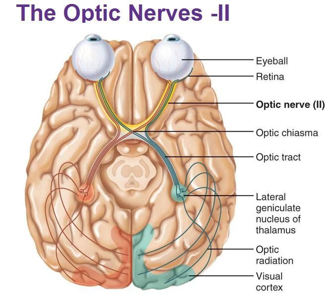 Overview: Optic neuritis is an inflammation of the optic nerve which ...
