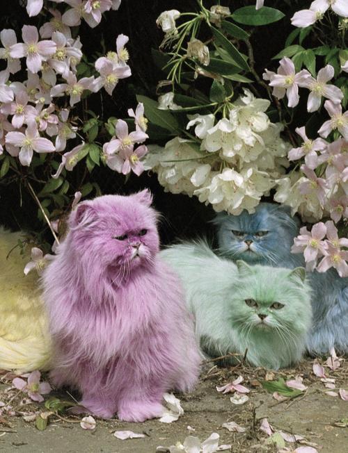 pastel cats