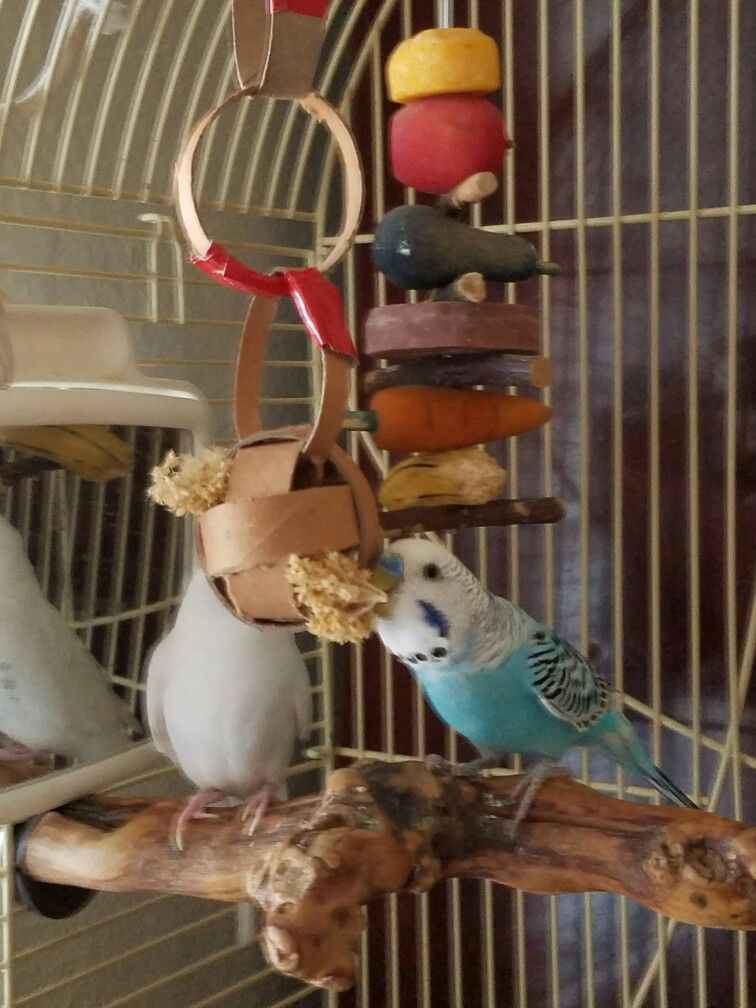 A parakeet foraging toy made out of toilet paper rolls