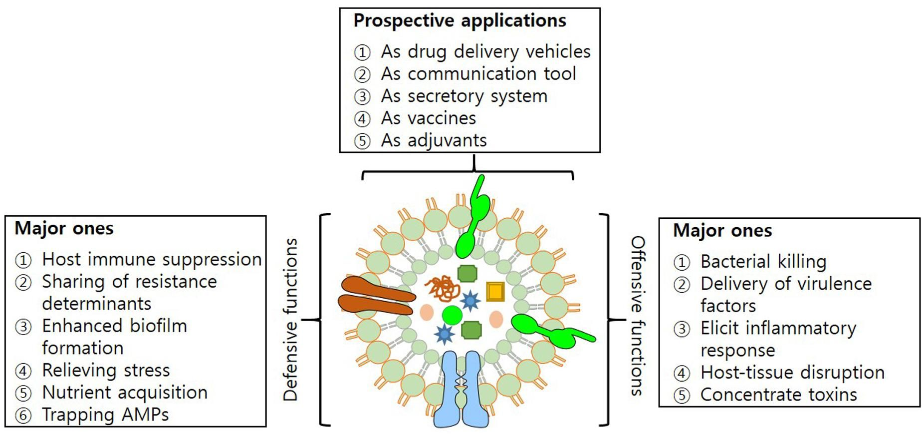 Outer membrane vesicles of gram negative microbes