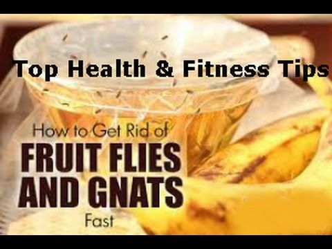 how to get rid of fruit fly at home