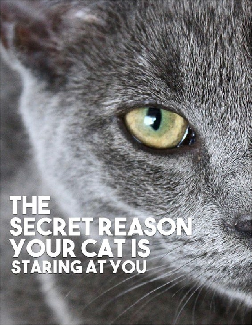 Are You Wondering Why Your Cat Is Staring At You Most People Who Own Cats Might Probably Curious About The Same Thing Since Cats O Cat Behavior Cats Cat Facts