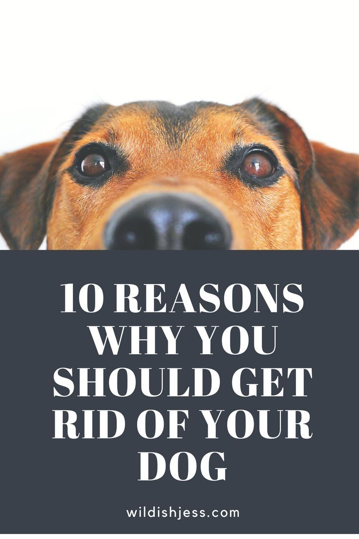 10 Reasons Why You Should Get Rid of Your Dog Your dog