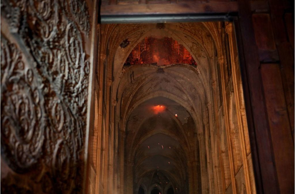 A Challenge of Rebuilding Notre Dame The Forests That