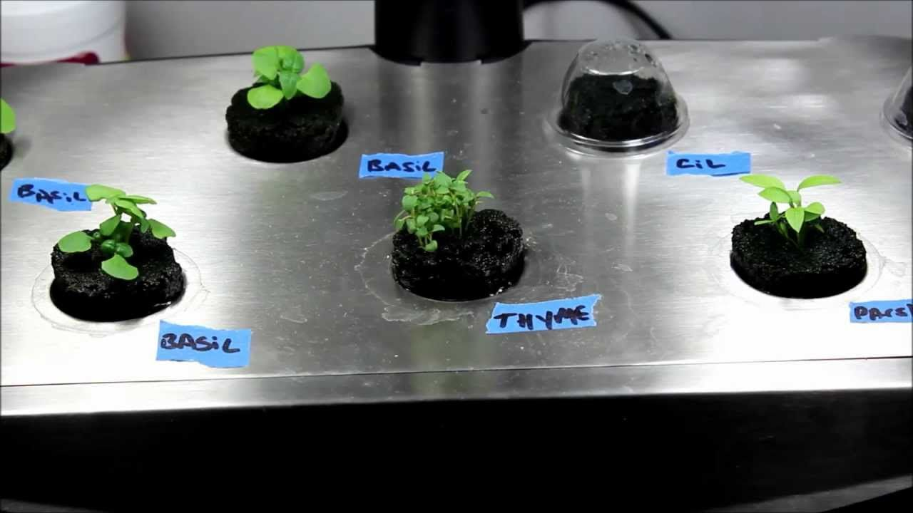 Make Your Own Aerogarden Seed Pods Diy Seed Pod Kits 400 x 300