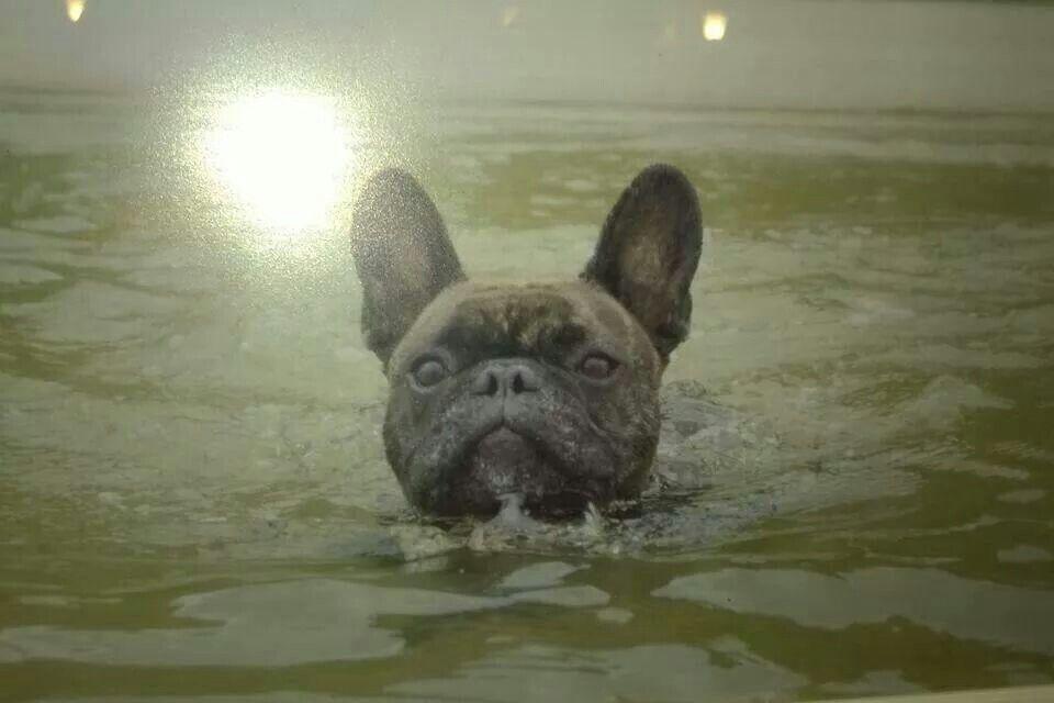 Je nage bien... ...