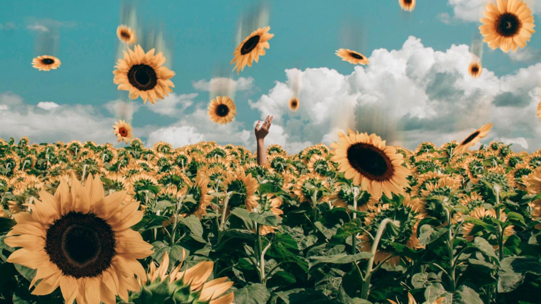 Aesthetic Wallpaper Sunflower Wallpaper Sunflower Wallpaper Hd Sunflower Iphone Wallpaper