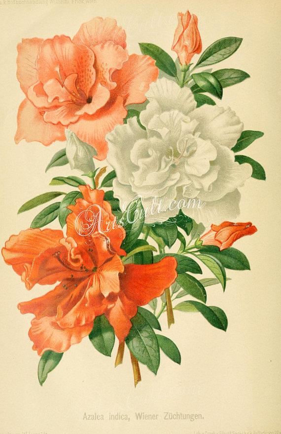 flowers 16616 azalea indica rhododendron indicum bouquet wonderful rh pinterest com