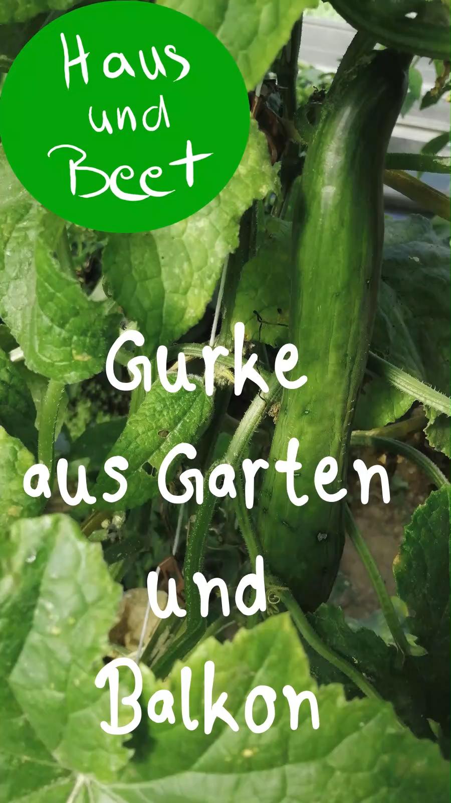 Photo of Gurke – Gemüse aus deinem Garten und Balkon