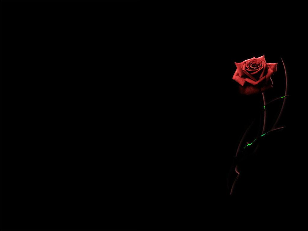 Looks - Rose black backgrounds video