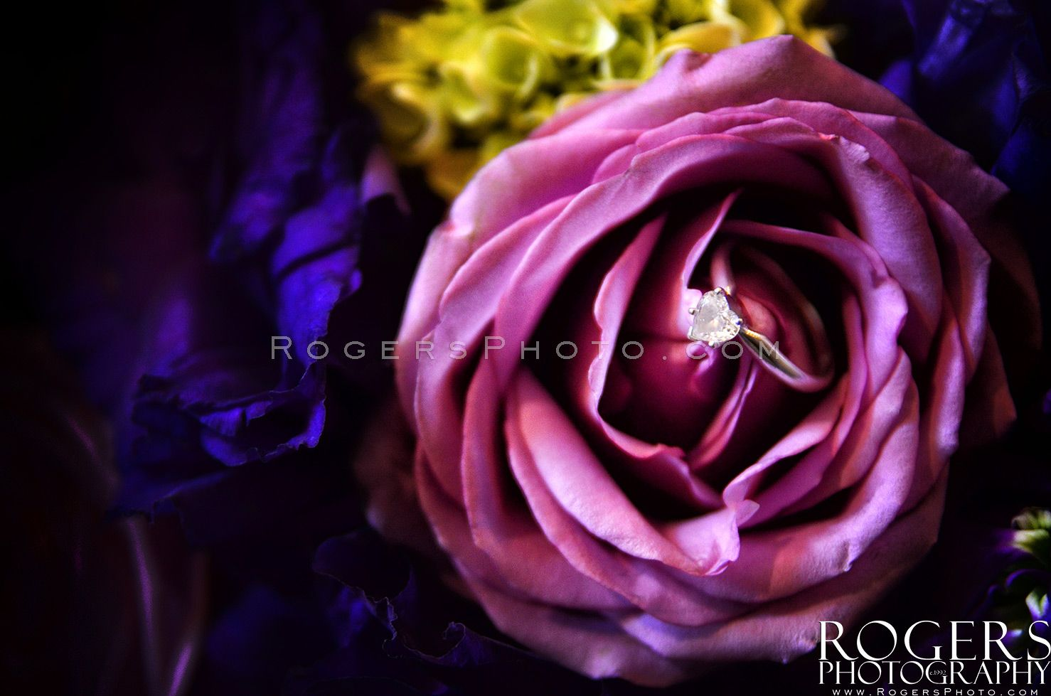 Engagement Ring. - Rogers Photography | Wedding Rings & Blings of ...