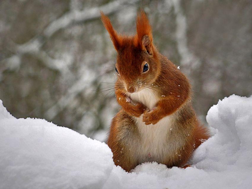 Wintereinbruch von Andre´s Bilderwelt