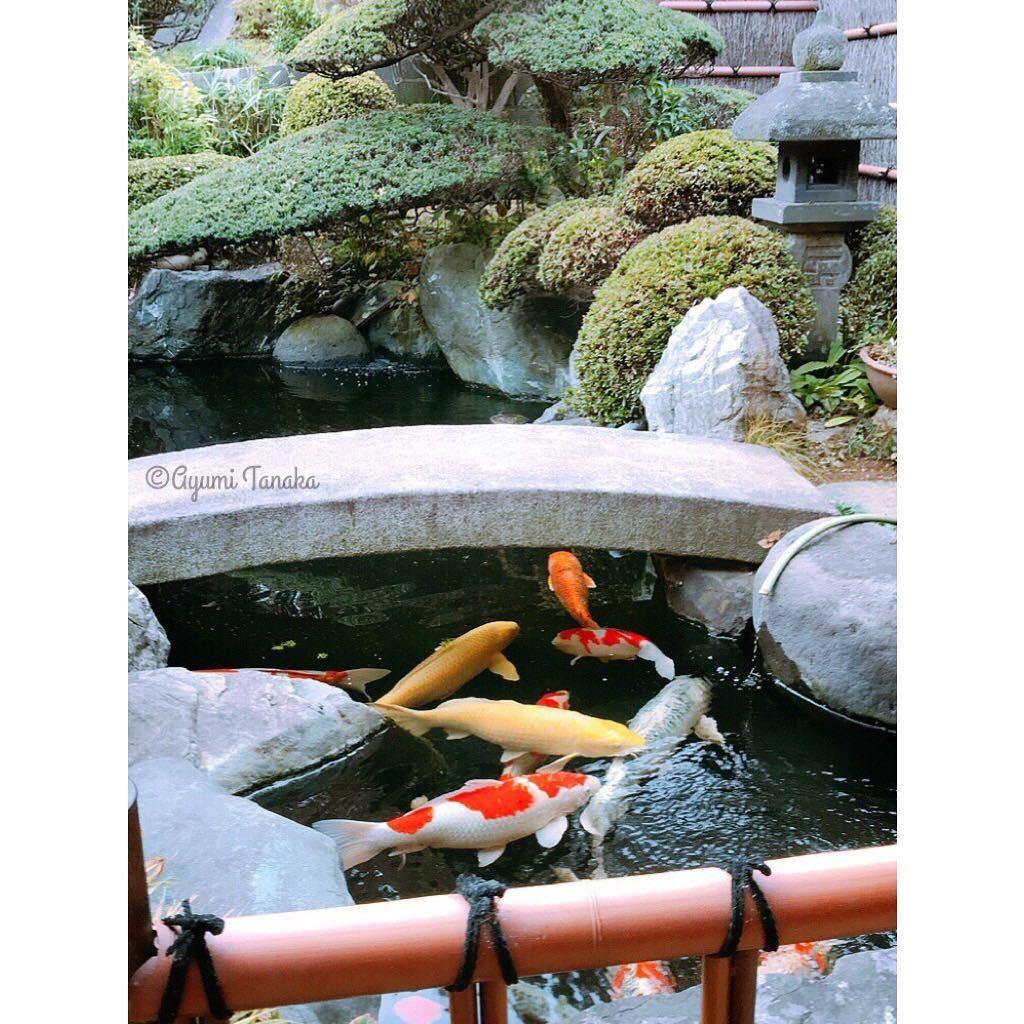 今日は息子の七五三で神社へ 待合室から見えた鯉が神々しい 幸せ 笑顔 happy 自由 楽しい ライフスタイル 起業 happiness 写真好きな人と繋がりたい カメラ女子 ファインダー越しの私の世界 七五三 神社 池 鯉 日本庭園 koi pond pond koi