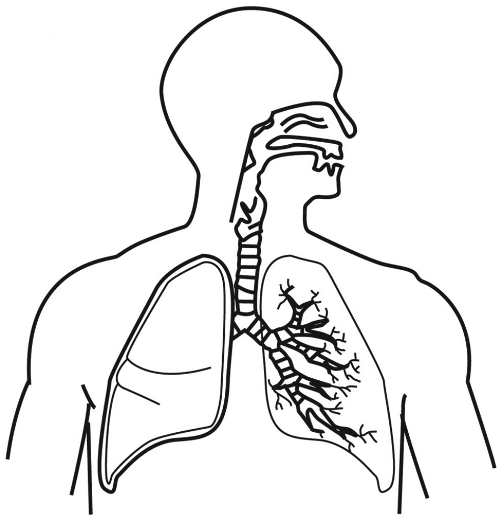 Draw A Human Respiratory System And Label It Respiratory