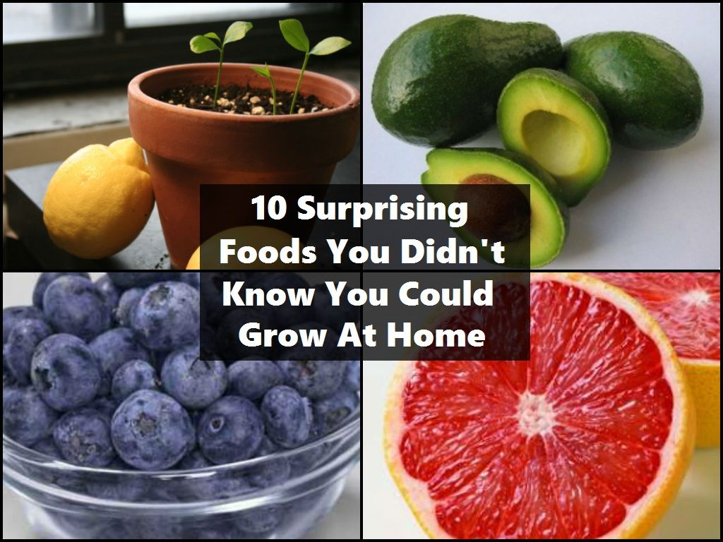 10 Surprising Foods You Didn T Know You Could Grow At Home Food Garden Food Growing Food