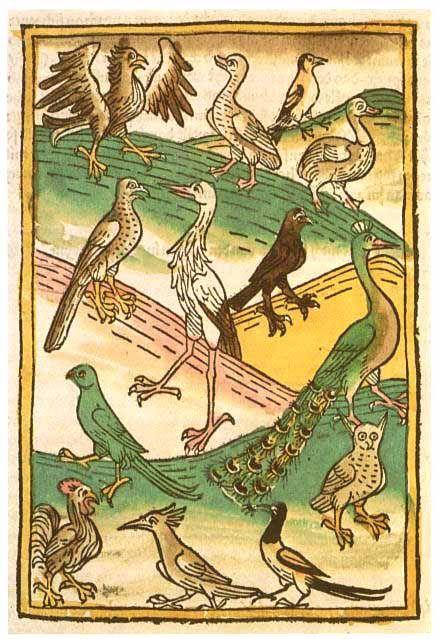 Konrad von Megenberg, Buch der Natur, incunabulo del 1481