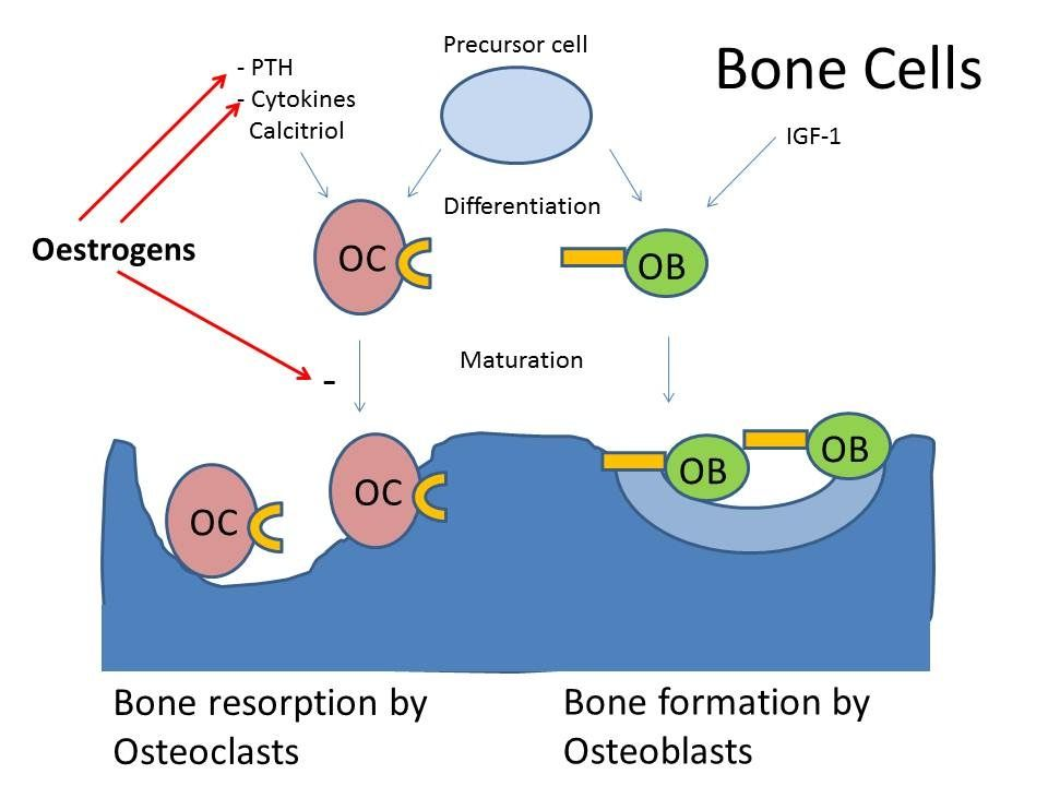 19+ What is the icd 9 code for osteoporosis info