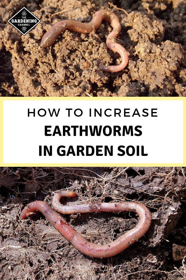 How To Increase The Number Of Earthworms In Your Garden Soil