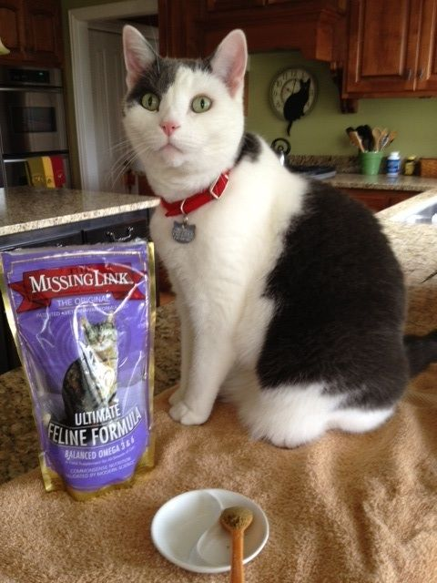 The Missing Link Feline Update After 5 Weeks Of Use News Bubblews Pet Supplements Feline Pets
