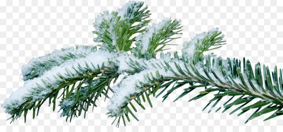 Choinka Oddzial Jodla Jodla Christmas Tree Artificial Christmas Tree Christmas Tree Branches