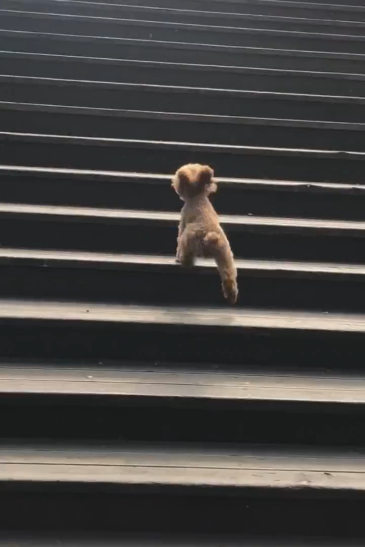 He runs so fast