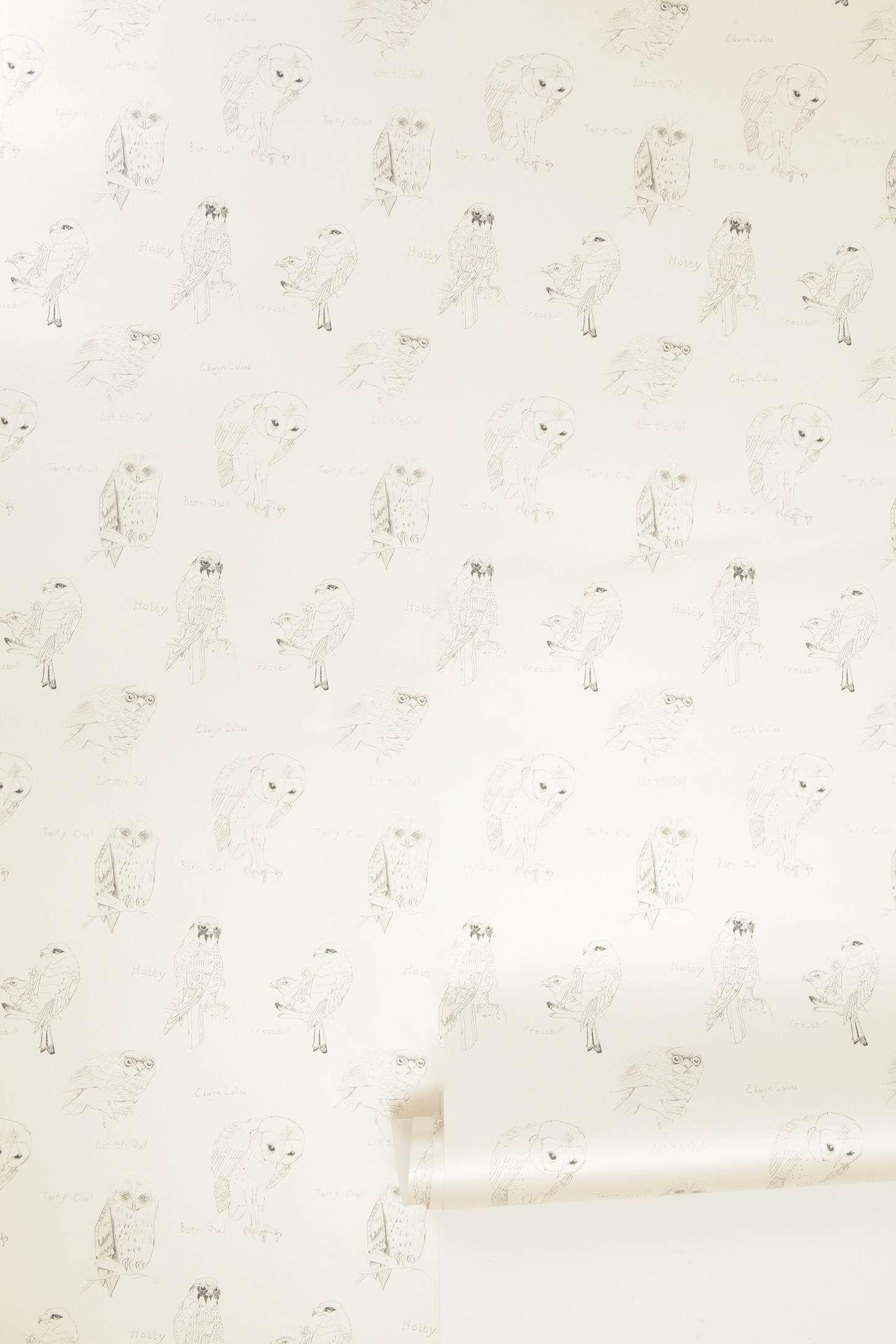 Accent Wall In A Bedroom Or Bathroom Owl Wallpaper Wallpaper Home Wallpaper