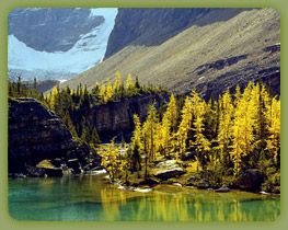 Lake O'Hara, British Columbia, Canada. The ultimate escape and display of untouched beauty