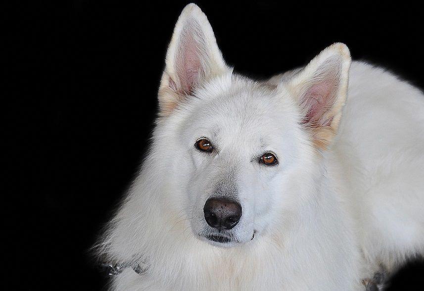 Pin On Dog Training Ideas