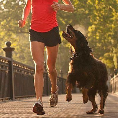 Don't: Run when it's  Don't: Run when it's too hot: Health, safety, and behavioral running tips for logging miles with your four-legged fitness partner. |  Health.com