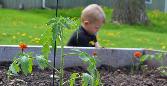 Expert Advice for Growing a Backyard Vegetable Garden in ...