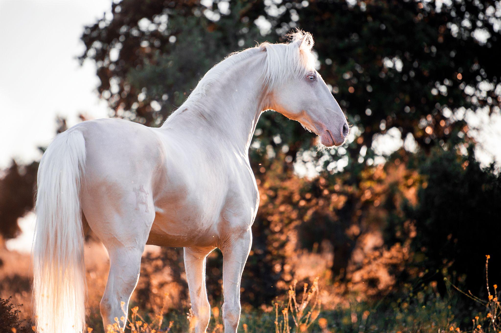 Fotos Pferde In Der Natur I Pferde Pferde Tapete Pferde Fotografie