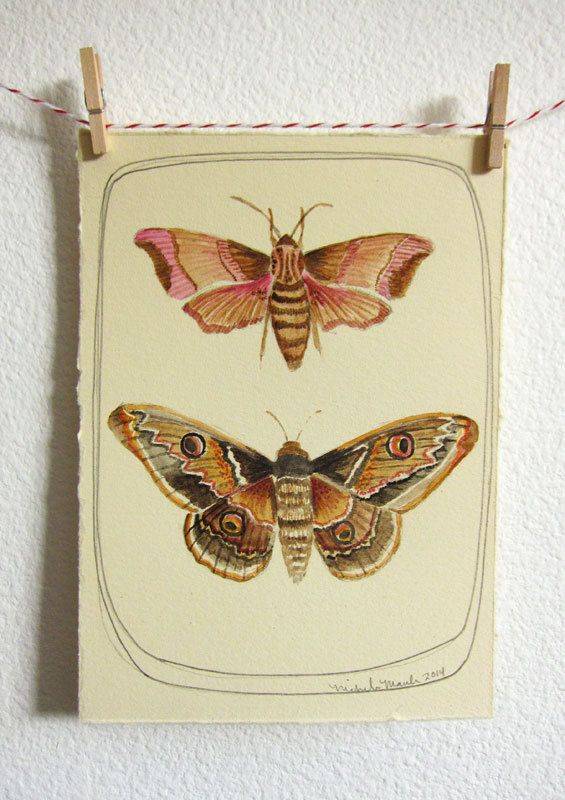Moth Watercolor Painting by Michele Maule